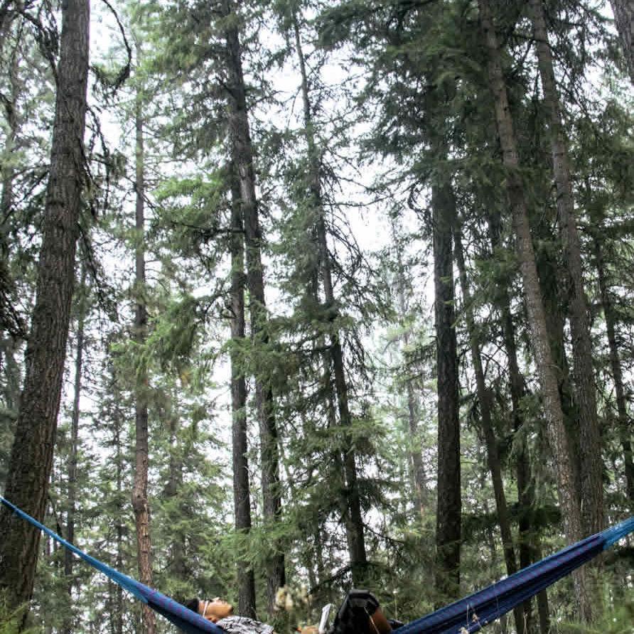 hammock in the woods